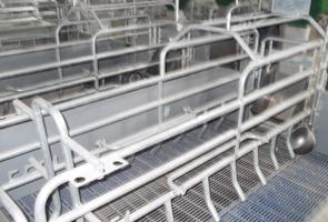 養鶏 分娩柵